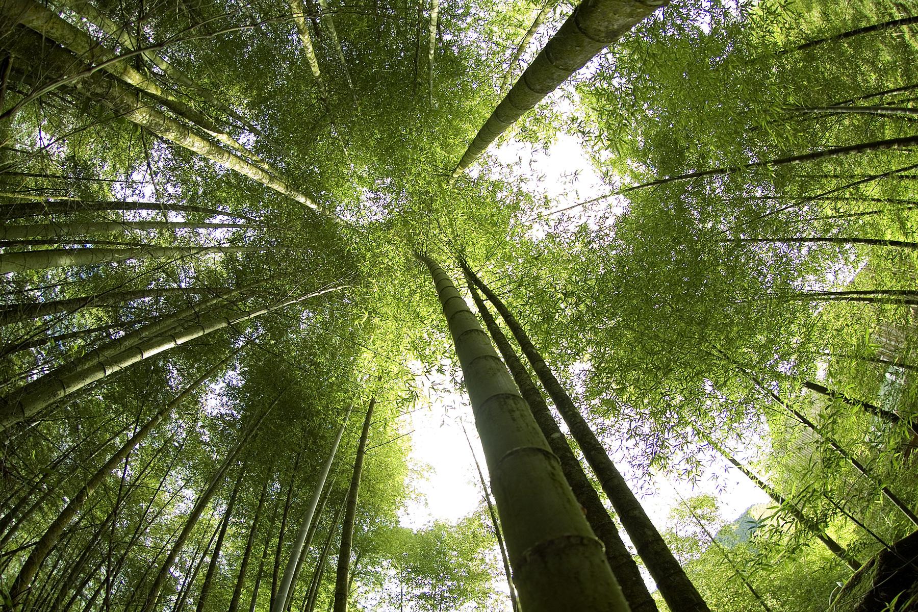 Préserver les arbres
