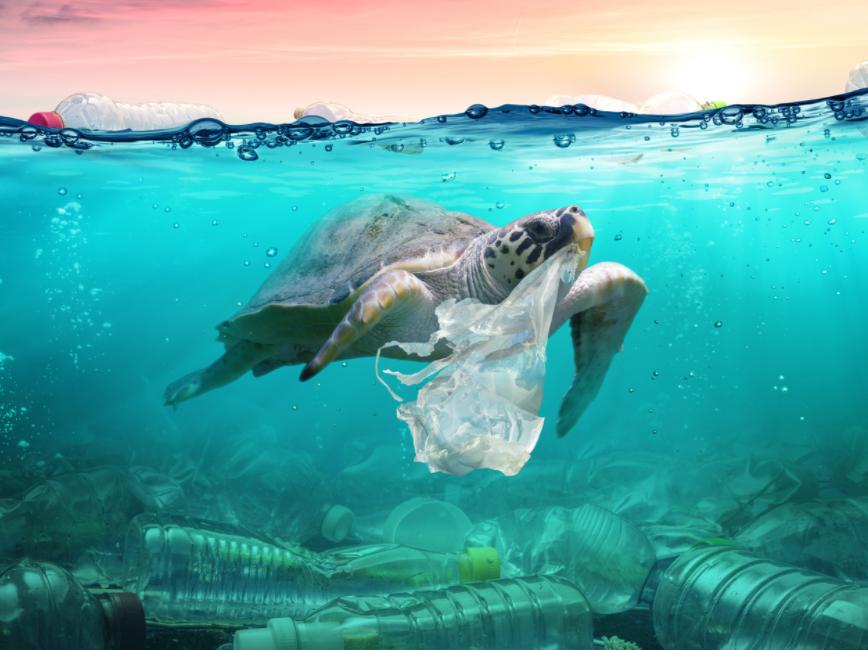 5 îles de déchets